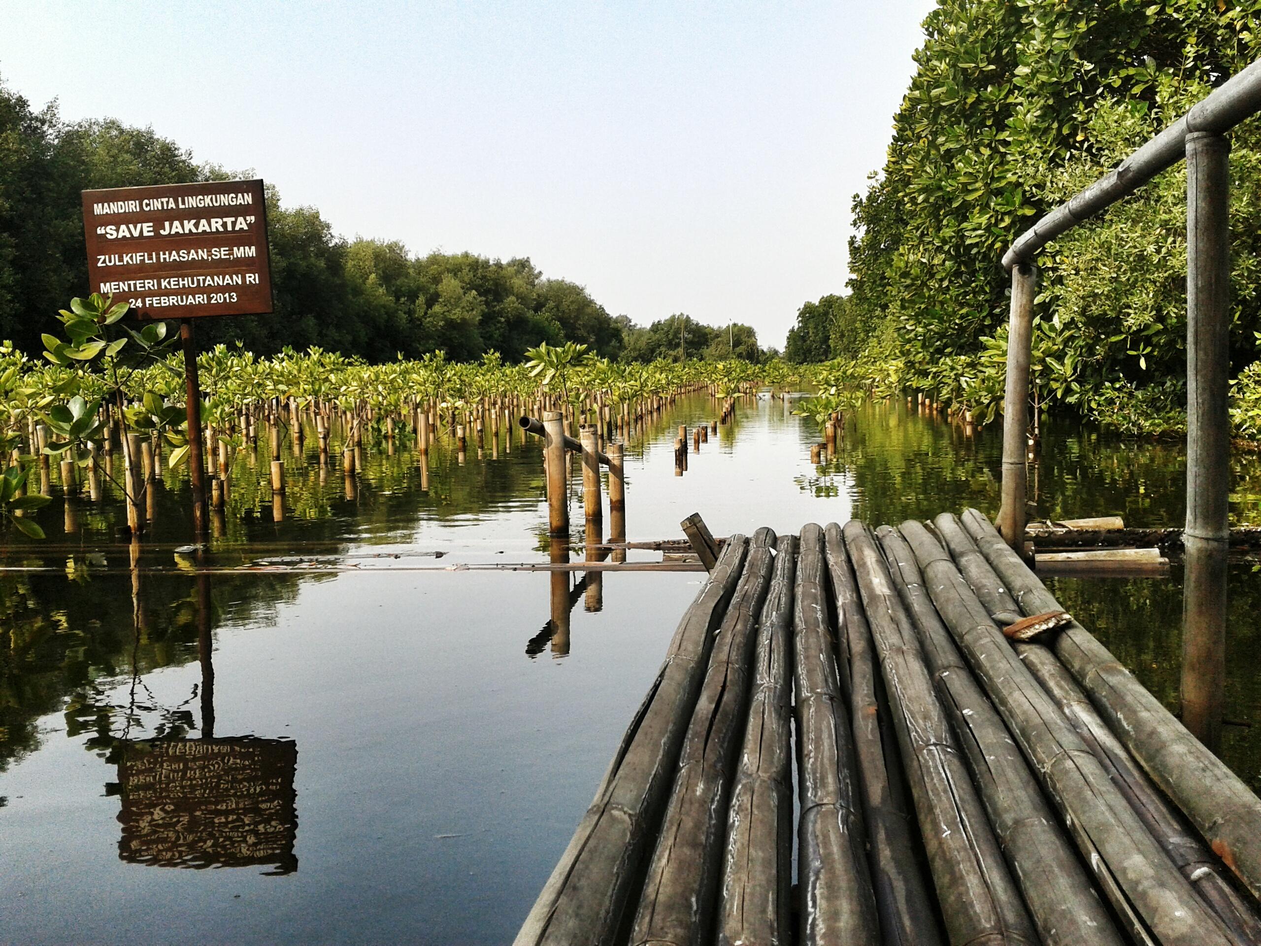 Beberapa Fakta Tentang Taman Wisata Alam Angke Kapuk | Males Mandi