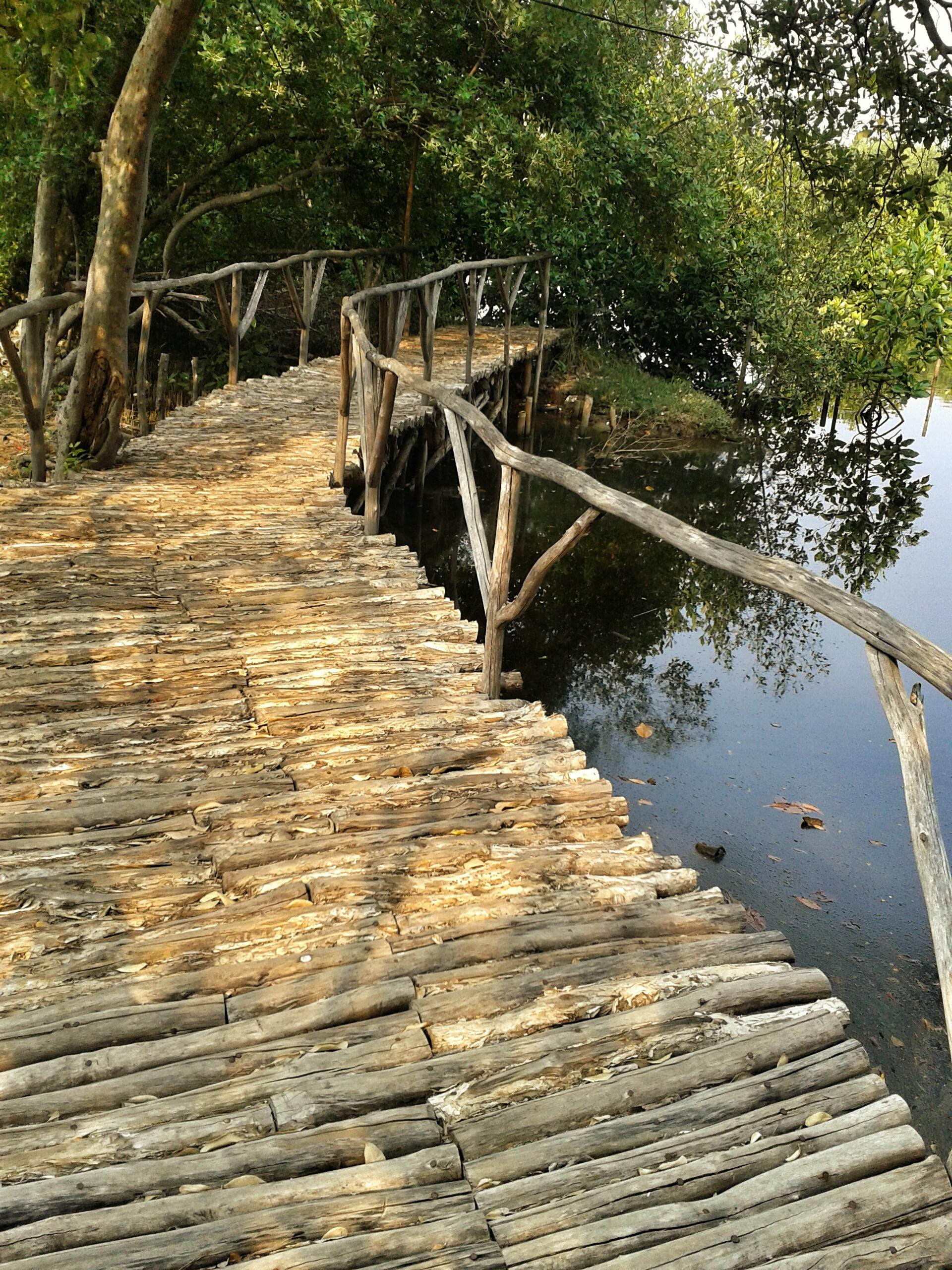 Beberapa Fakta Tentang Taman Wisata Alam Angke Kapuk Males Mandi