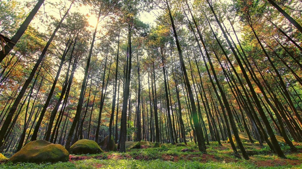 piknik ala twilight di hutan pinus gunung pancar