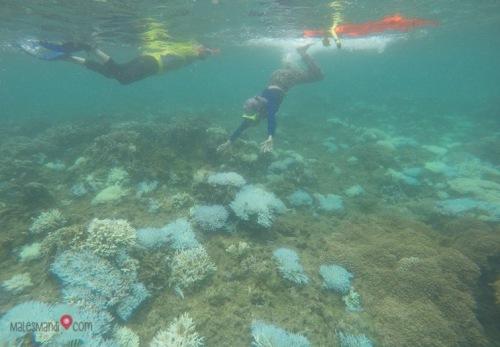 area-snorkeling-teluk-kiluan