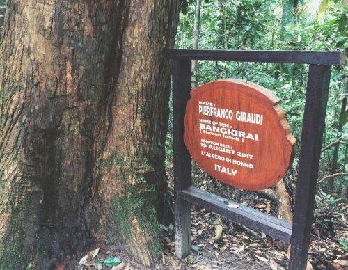 adopsi-pohon
