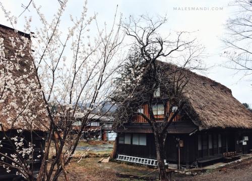 sakura-shirakawa-go