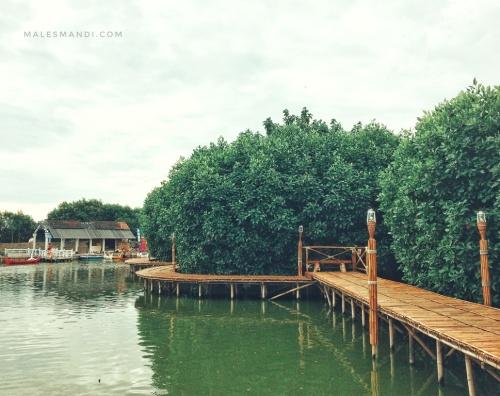 mangrove-maerokoco