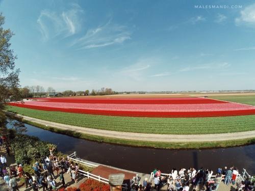 kebun-tulip-aerial